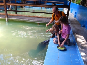 Corey, Oliver and Audrey feeding a rescued manatee.